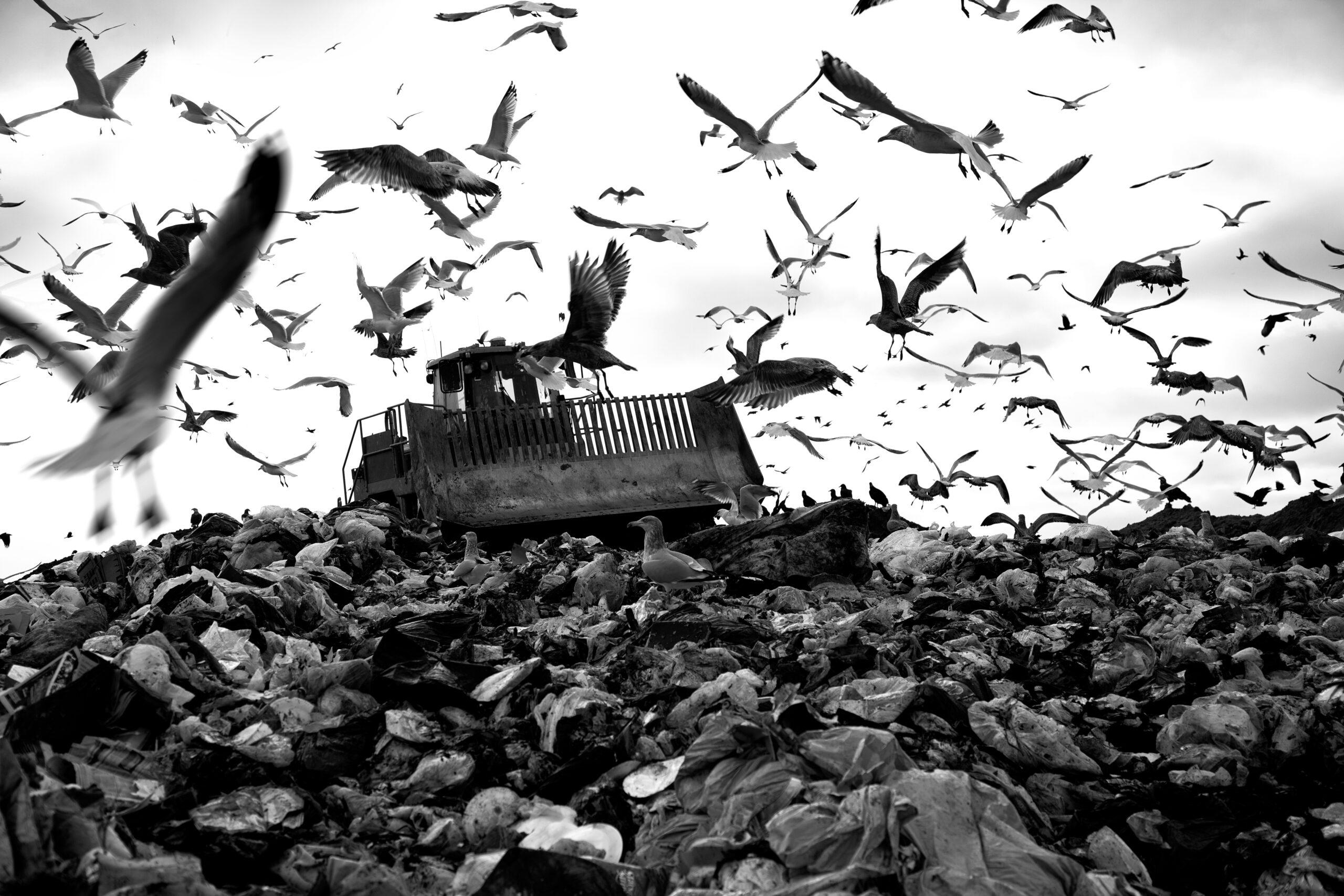 Alertă: Criza deșeurilor – teren fertil pentru construirea incineratoarelor